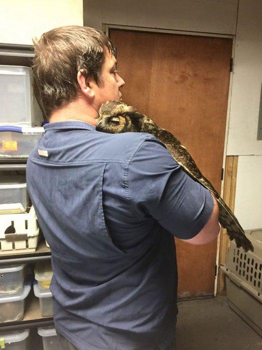 當貓頭鷹的救命恩人波赫基歸來後, 牠很激動地抱著他。