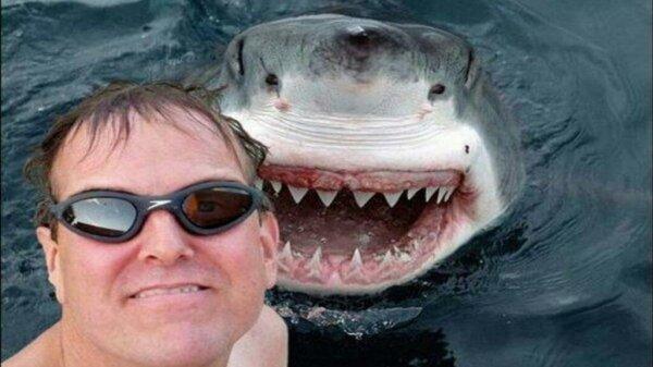 2. 以真的鯊魚作為自拍背景