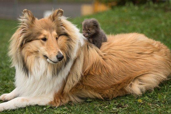 小狐狸迪諾卓(Dinozzo)的母親在一場車禍中喪生了。 大多數的野生動物幼...