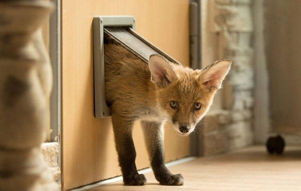 關愛的狗狗和貓咪讓迪諾卓感覺到了家庭的溫暖, 而現在牠都會經常使用...