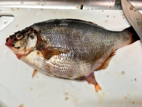 有網友發推特稱買了一條魚回家後才發現,似乎變成不止一條而已……