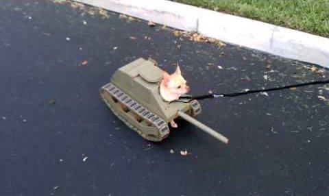 坦克裝飾是由紙板和紙夾子(用在軌道)製成,坦克的後端特別修正後,狗...