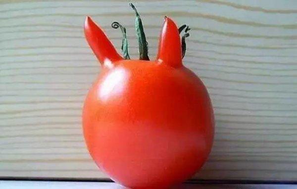 1,番茄惡魔
