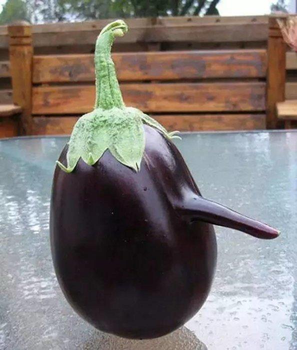 3,長鼻子的茄子