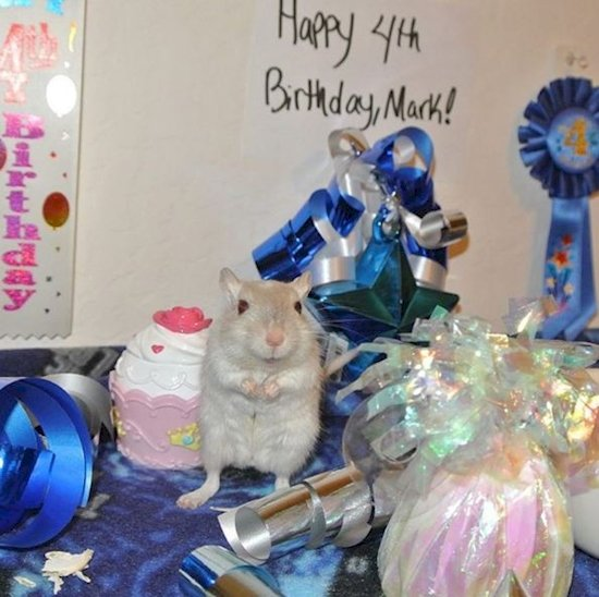 13. 我的生日派對比你的更好。