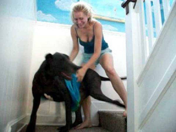 狗狗洗好澡後,就得幫狗狗抹身子。毛髮多的還是用吹風筒吹比較容易干,...
