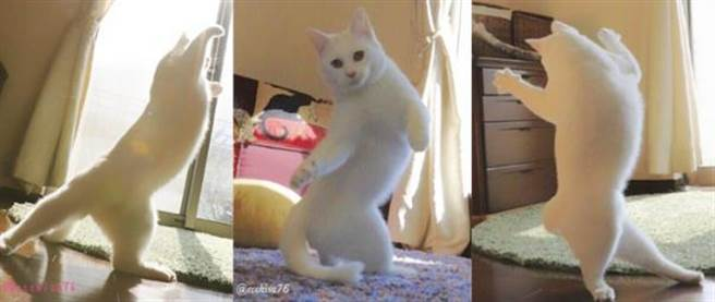 日本一位貓奴飼主在推特上分享家中喵星人整天在家裡做一些非常奇怪的事...