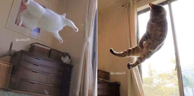 連另一隻貓咪也開始學功夫了!她把偷拍的照片放上Twitter,居然引起廣大...