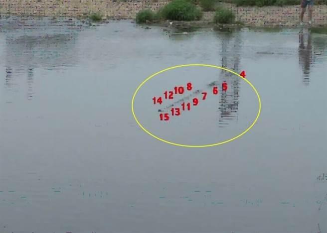 石子於極短時間內在水面連續快速彈跳了91下,如不用慢鏡重看,還以為石...