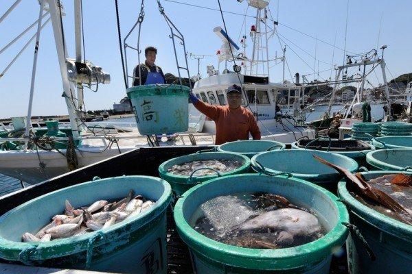 另一方面,日本人的長壽飲食也絕對離不開豐富的海產品。日本是世界上非...
